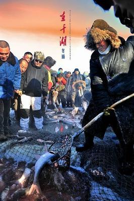 吉林省白城市通榆县花鲢 野生 10-18公斤