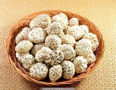 河南省驻马店市泌阳县泌阳花菇 鲜香菇 2.5cm~4cm 秋菇