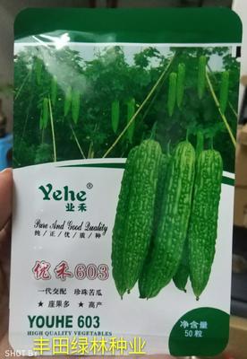 福建省漳州市南靖县绿苦瓜种子  袋装 603高产耐热油绿色