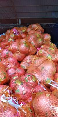 湖南省湘西土家族苗族自治州龙山县红心柚  4斤以上 一件代发