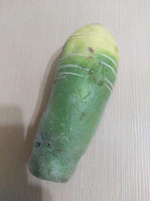 宁夏回族自治区石嘴山市平罗县水果萝卜 1.5~2斤