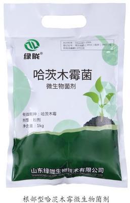 这是一张关于哈茨木霉菌 的产品图片