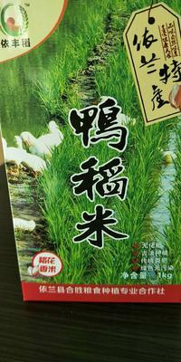 黑龙江省哈尔滨市依兰县稻花香二号大米 一等品 晚稻 粳米