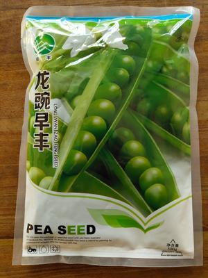 甘肃省酒泉市肃州区长青豆角种子 ≥95%