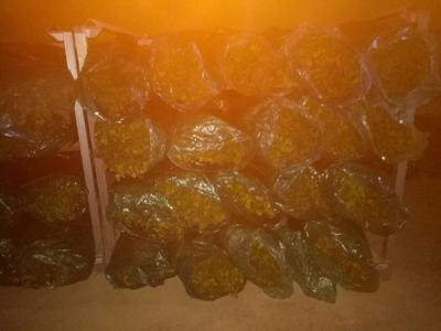这是一张关于大叶香菜55.0cm 的产品图片