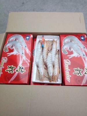 山东省威海市乳山市中国对虾 人工殖养 4-6钱