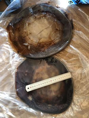 这是一张关于海蜇头 的产品图片