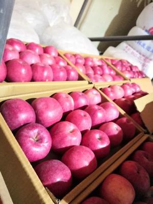 甘肃省平凉市静宁县红富士苹果 80mm以上 片红 纸+膜袋