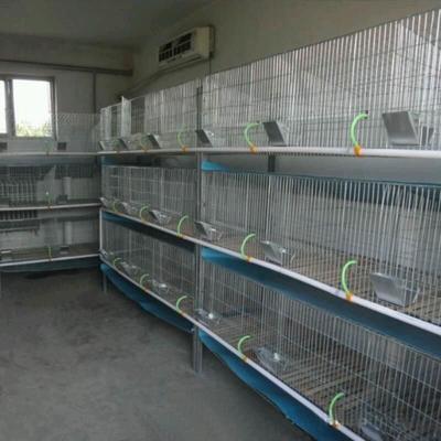山东省济宁市嘉祥县兔笼 兔笼,鸽笼,各种配件