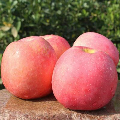 山东省临沂市沂水县红富士苹果 60mm以下 条红 光果