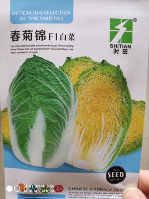 江苏省宿迁市沭阳县白菜种子 杂交种 ≥85%