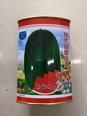 山东省济南市历城区甜王西瓜种子 亲本(原种) ≥90%