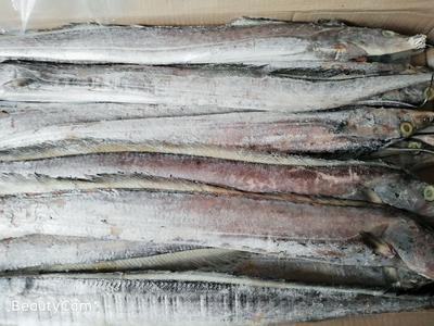 山西省晋中市介休市中东带鱼 野生 0.5公斤以下