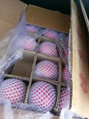 这是一张关于静宁苹果  70mm以上 条红 纸袋 香,甜,口感好的产品图片