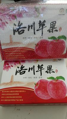 陕西省延安市洛川县洛川苹果 80mm以上 全红 纸袋