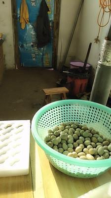 河北省石家庄市行唐县桂花雀蛋 孵化 散装