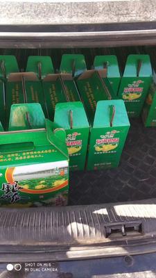 山东省潍坊市青州市火银瓜 1斤以上