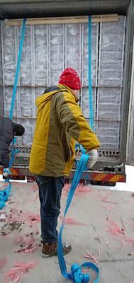 新疆维吾尔自治区乌鲁木齐市头屯河区红提 1.5- 2斤 10%以下 1次果