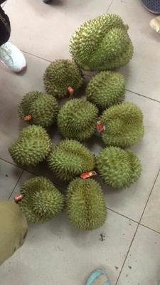 这是一张关于猫山王榴莲 2 - 3公斤 80 - 90%以上 的产品图片