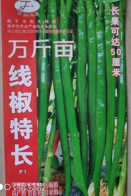 江苏省宿迁市沭阳县线椒种子 亲本(大田用种) ≥85%
