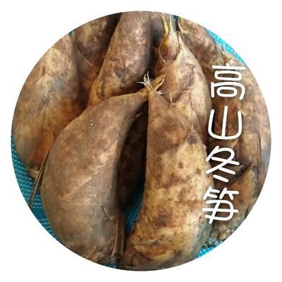 湖南省邵阳市洞口县冬笋 鲜笋