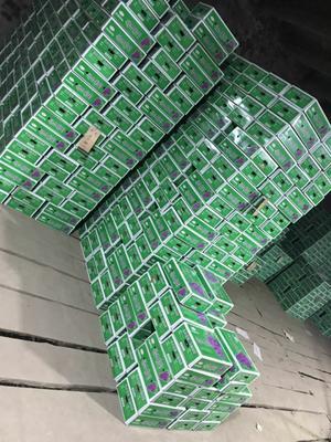 河北省石家庄市晋州市巨峰葡萄 0.6-0.8斤 5%以下 1次果