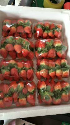 河南省郑州市中牟县甜查理草莓 20克以上