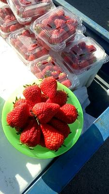 北京通州区红颜草莓 20克以上