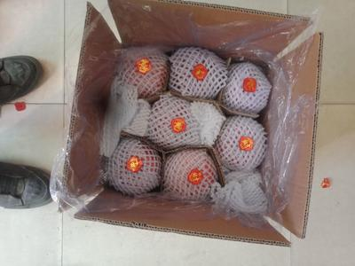 陕西省延安市宜川县红富士苹果 80mm以上 全红 纸袋