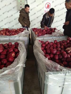 甘肃省天水市麦积区花牛苹果 75mm以下 全红 光果