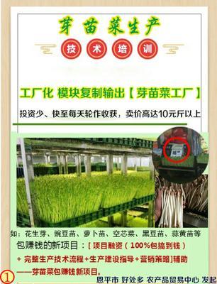 广东省江门市恩平市麻豌豆 7-10cm
