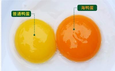 广西壮族自治区北海市海鸭蛋 食用 散装