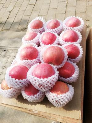 四川省成都市都江堰市红富士苹果 80mm以上 条红 纸袋