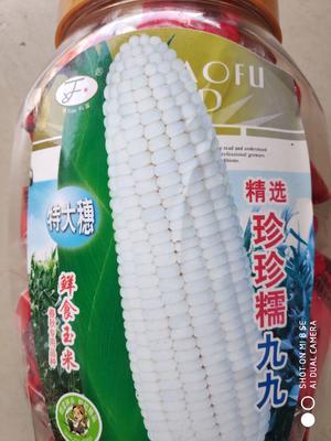 江苏省宿迁市沭阳县珍珍糯99玉米 单交种 ≥85%