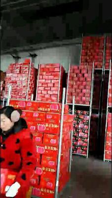 陕西省咸阳市礼泉县红富士苹果 75mm以上 片红 纸袋