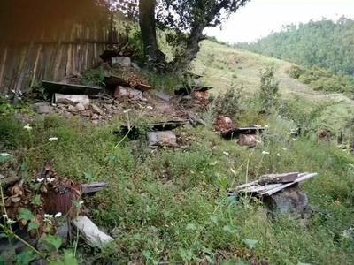云南省迪庆藏族自治州维西傈僳族自治县土蜂蜜 玻璃瓶装 2年以上 100%