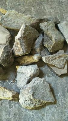内蒙古自治区乌兰察布市四子王旗龙骨  统货:干净无杂质