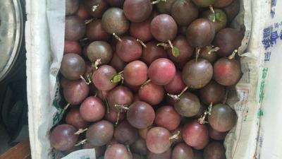 福建省漳州市华安县紫色百香果  40 - 50克 小果