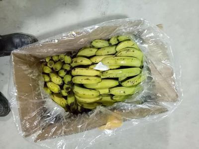 河北省邯郸市丛台区广西蕉 八成熟