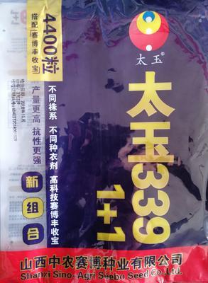 河南省新乡市延津县太玉339  高产记录2896斤