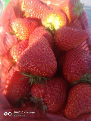 山西省太原市晋源区红颜草莓 20克以下
