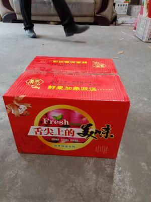 山西省运城市临猗县冰糖心苹果 70mm以上 片红 纸+膜袋