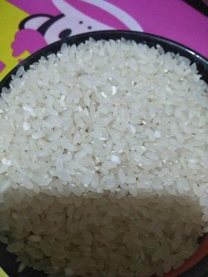 黑龙江省齐齐哈尔市龙江县东北大米 一等品 一季稻 粳米
