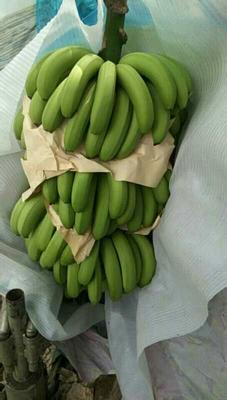 重庆渝北区金平香蕉 七成熟