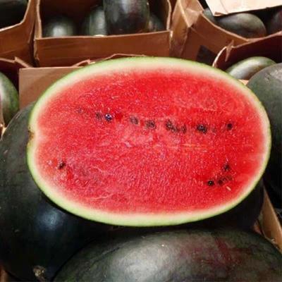 广西壮族自治区崇左市凭祥市黑美人西瓜 5斤打底 8成熟 2茬 有籽