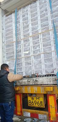 新疆维吾尔自治区昌吉回族自治州昌吉市红提 1.5- 2斤 10%以下 1次果