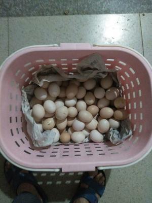 福建省龙岩市长汀县土鸡蛋 食用 箱装