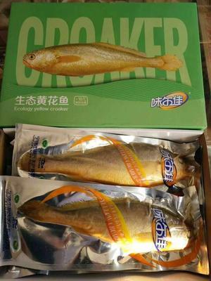 河南省郑州市中牟县大黄鱼 人工殖养 0.5公斤以下