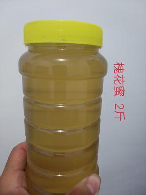 山东省菏泽市单县意蜂蜂蜜 散装 2年以上 100% 蜂场直销的纯天然蜂蜜