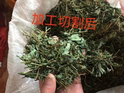 广西壮族自治区来宾市金秀瑶族自治县绞股蓝茶 三级 散装